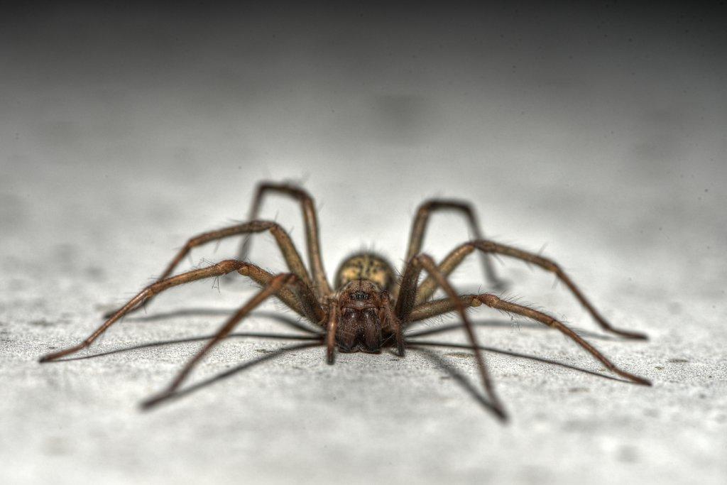 Spider-20180802.jpg